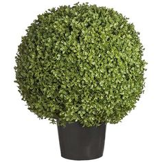 Sia Potted Topiary Boxwood Shrub - Large (440 CAD) ❤ liked on Polyvore featuring home, home decor, floral decor, black, fake boxwood topiary, artificial topiaries, black home decor, faux topiary and fake topiary