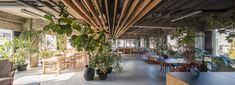 general design completes plant-filled office for a tokyo-based creative agency