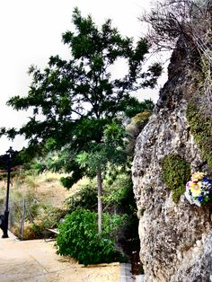 Ruta hacia el Santuario de las Flores