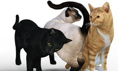 The breeds of cats developed by modern methods are numerous. Each breed has its…
