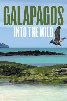 Galapagos Into the Wild. Everyone knows the Galapagos as a 'once-in-a-lifetime' vacation, and that these much-mythologized islands are a wildlife wonderland.