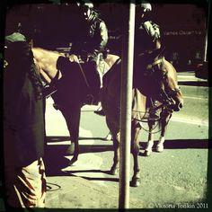 Police Horses, NY