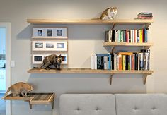 Heres a fantastic example of custom-built cat climbing shelves, designed by an architect. The perfect way to Catify your home! Cat Climbing Shelves, Cat Wall Shelves, Library Shelves, Shelves For Cats, Cat Climbing Wall, Living With Cats, Cat Playground, Cat Room, Space Cat