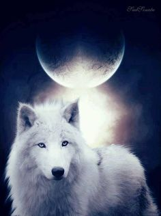 beautiful wolf and moon pictures Artwork Lobo, Wolf Artwork, Beautiful Wolves, Animals Beautiful, Cute Animals, Wolf Photos, Wolf Pictures, Wolf Love, Feral Heart
