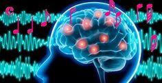 Un nuevo estudio explica los mecanismos cerebrales que explican la anhedonia musical específica, es decir, la falta de sensibilidad a la música. El estudio hace referencia a la importancia de la música a nivel evolutivo según la conexión entre las áreas auditivas y emocionales del cerebro.