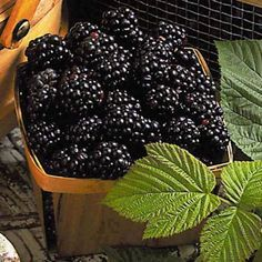 My absolute favorite fruit! Blackberry, Raspberry, Fruit Plus, The Breakfast Club, Fresh Fruits And Vegetables, Farmers Market, Pure Products, Cherries, Blueberries