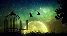 Birds couple escaping from the cage. Released to nature. Beautifu and positivel screen saver with a starry sky and a full moon