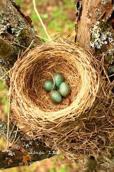 4 little eggs by Inga ., via 500px