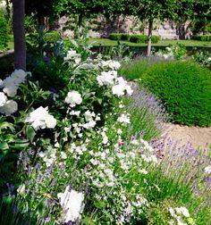 Love white gardens.