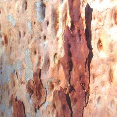 Eucalypt bark