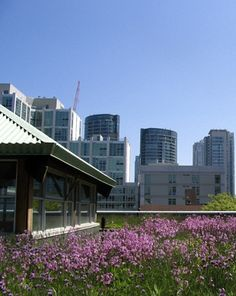 The Rise of Green Roofs | Homes | Green Living