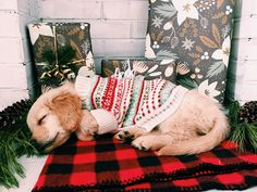 10 Etsy Finds Your Dog Wants For Christmas
