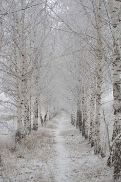 Winter Tree Tunnel ♥ I can't wait for snow