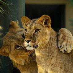 Darıca Hayvanat Bahçesi  Fotoğrafı gönderen: Ahmet Özcan