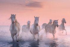 White horses of Camargue Photo Tour Photography Tours, Horse Photography, Landscape Photography, Stunning Photography, Modern Art Prints, Wall Art Prints, Canvas Prints, Poetry Photos, Iceland Photos