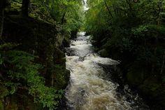 The stunning west coast of Scotland. #westisbest #glebure #argyll #Scotland #gorge #trees #Moss #nature #NaturePhotography #naturelovers #river West Coast Scotland, Space Wedding, Scottish Highlands, Glamping, Nature Photography, Waterfall, Trees, River, Outdoor