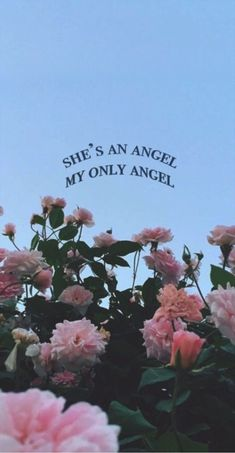 Only angel //Harry styles Wallpaper Spring, Tumblr Wallpaper, Flower Wallpaper, Wallpaper Quotes, Iphone Wallpaper Vintage Quotes, Angel Wallpaper, Aesthetic Roses, Blue Aesthetic, Quote Aesthetic