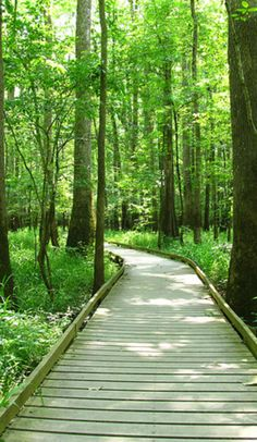 Explore South Carolina's Congaree National Park looking for wood elves and feral pigs