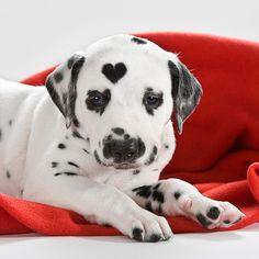 aww.. he has a heart on his head!!!! #dog