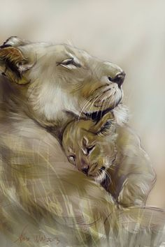 I like the closeness and cuddles here. I was the girl cub to look as attached to the lioness as this one does even while playing.