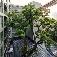 Via Botani Landscape Design by Open Box | Wison Tungthunya's Photography