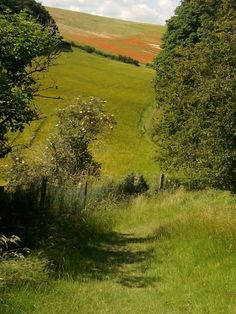Coombe Dale, East Yorkshire