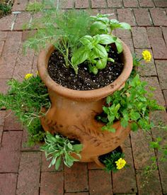 Grow Tomatoes In Pots Planting Herbs in a Strawberry Jar - Bonnie Plants Strawberry Planters, Strawberry Garden, Herb Pots, Garden Pots, Garden Ideas, Herbs Garden, Tomato Garden, Vegetable Garden, Tomato Basil