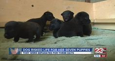 Rescued Dog Escapes to Save Puppies