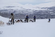 Escursione con i cani da slitta - Dogsledding (Giancarlo Migliore, Abisko)