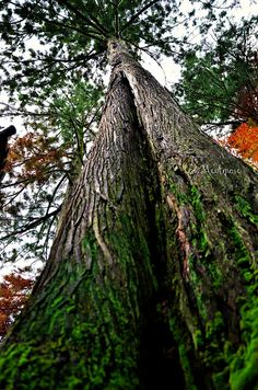 TREE by MeAmore5, via Flickr