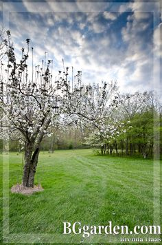 Orchard in the #spring BGgarden