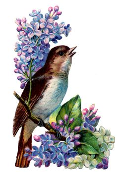 PRETTY BIRD STANDING ON LILLAC LIMB--WOULD MAKE FABRIC FOR ANY USE LOOK GREAT-- GRAPHIC FAIRY HAS INSTRUCTIONS ON HOW TO TRANSFER IMAGES TO SEVERAL DIFFERENT SURFACES