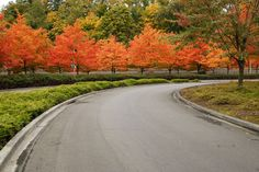 Best Trees for Driveways - especially for beautiful fall color.