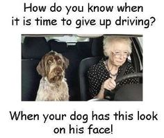 remind me to get a dog like this when i get to be elderly