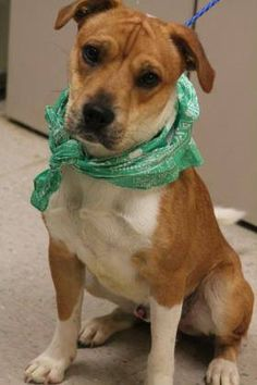 NAME: Alex  ANIMAL ID: 28020106  BREED: Sharpei mix  SEX: male-neutered  EST. AGE: 1 yr  Est Weight: 32 lbs  Health: heartworm neg  Temperament: dog friendly, people friendly.  ADDITIONAL INFO: RESCUE PULL FEE: $15  Intake date: 6/4  Available: Now