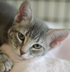 Orchid was adopted on 7/21/14!
