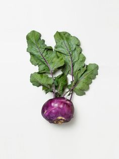 Turnips are so delicious. Plus, they are fat free, cholesterol free, are low in sodium and an excellent source of vitamin C. #nutrition http://lifecare.eu.com/