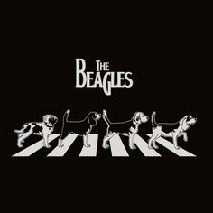 The Beagle Beatles - Portal do Dog - O maior Portal de Cachorros do Brasil ----- Also, click on the image to check out our exclusive Beagles t-shirt today! All sizes available in different colors. It's only $16.94 & available for a limited time on Amazon.com                                                                                                                                                      Más