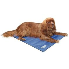 Many pets can suffer from the heat during hot summer months. The Scruffs® Cool Dog Mat is designed to provide relief for your pet. Dog Cooling Mat, Dog Cots, Cheap Dog Beds, Orthopedic Dog Bed, Online Pet Supplies, Pet Carriers, Pet Beds, Best Dogs, Dogs And Puppies