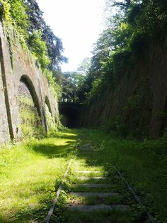 """La Petite Ceinture, literally """"the little belt,"""" is a disused railway line that at the time of its construction, encircled Paris.  This is the trench-like & overgrown line that runs through Parc Montsouris."""