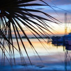 Palms over the water at the marina. Sailboat Living, Living On A Boat, Palms, Sailing, Cruise, Night, World, Water, Life
