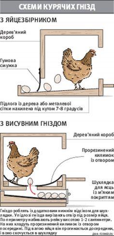 Виталий Котоний гнезда для кур сделал из брезента | Новини на Gazeta.ua