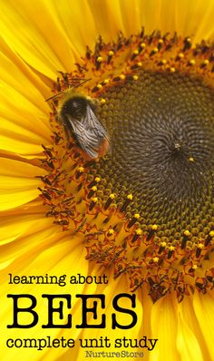learning about bees unit lesson plan about bees, eco lessons for kids