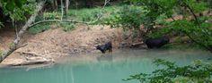 Calfkiller River. Sparta, TN. Home and final resting place of Bluegrass artist Lester Flatt. James E. Akenson jakenson@tntech.edu