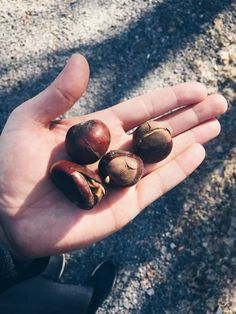 Growing oak and chestnut: supertipset! Seed Starting, Good To Know, Diy And Crafts, Wonderful Time, Gardening, Education, Inspiration, Decor, Dwarf Trees