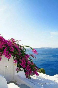 """White, blue and a touch of bougainvilleas!! Oia, Santorini """"Amazing Greece"""""""