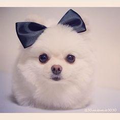 Animals in Bow Ties @animalsinbowties Instagram photos | Webstagram - the best Instagram viewer