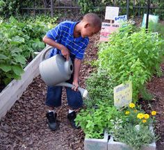 Edible Gardens for Kids 101 – HOMEGROWN