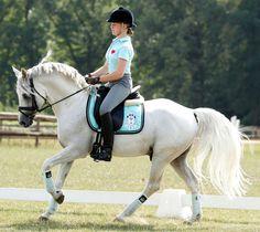 equine-world: Dressman IV「Domingo x Nadin」German Riding Pony Stallion