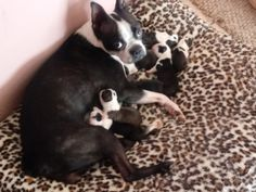 Mom an 8 babies